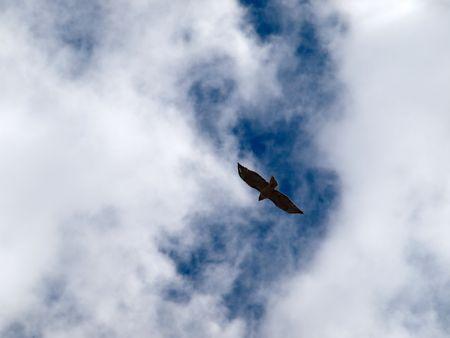 Shot of bird silhouette agains cloudy sky Imagens - 3313875