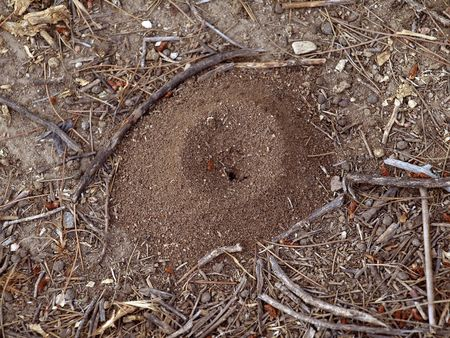 Close up of ant hill