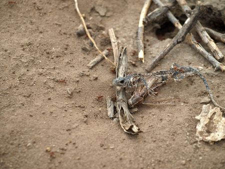 close up shot of dried lizard remains