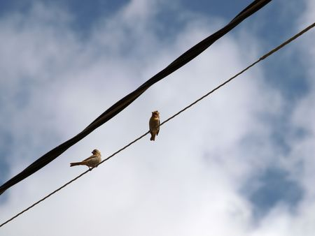 Two birds on  electric line against blue sky