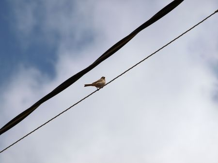 Shot of Bird On a Wire against blue sky
