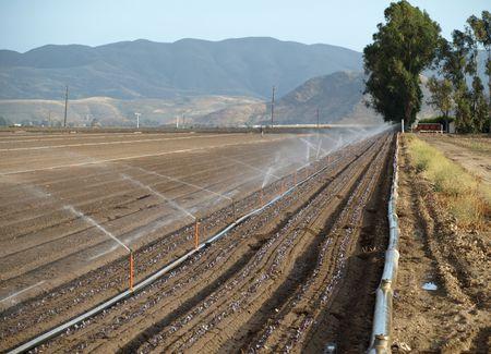 dampen: row of water sprinklers in field Stock Photo