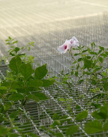 viny plant branching on wire mesh