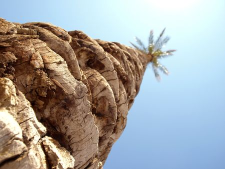 shot of palm tree against blue sky