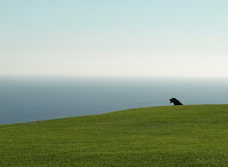 black dog on the grass looking out the ocean