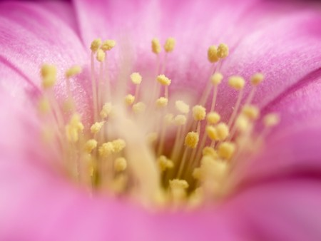 Close up shot of Flower Imagens