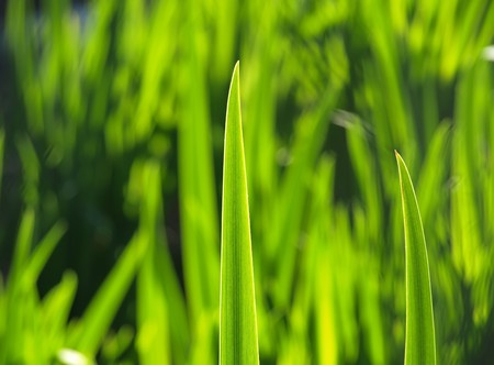 Blade of grass against the sun Imagens