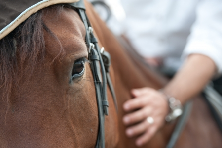 closeup of a horse head with detail on the eye and on rider hand  harnessed horse being lead - close up details   a stallion horse being riding  A picture of an equestrian on a brown  horse in motion