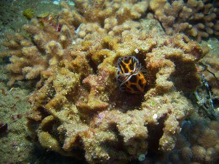 nudibranch: nudibranch in sea spnge