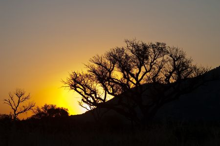 thorn bush: Sunset in Limpopo Bushveld against typical thorn bush silhouettes
