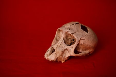A monkey skull with a hole in the head n a red background photo