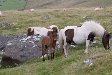 Dartmoor Mare and Foal on Dartmoor Devon
