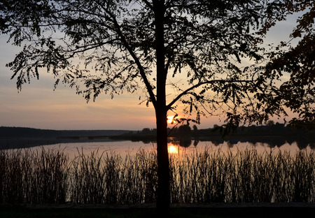 non urban: Tree near the lake and sunset