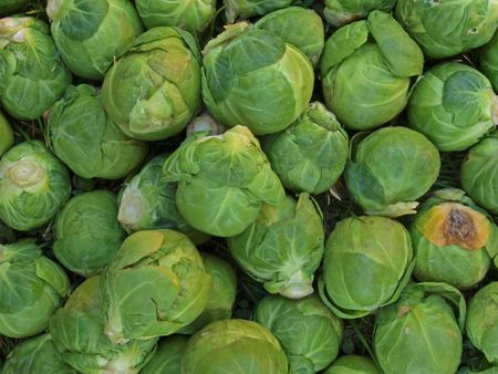 brussel: Close up photo of brussel sprouts. Stock Photo