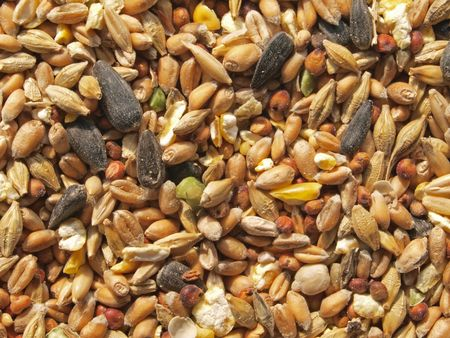 Food put out in a garden to feed wild birds in the winter. Stock Photo - 4669100