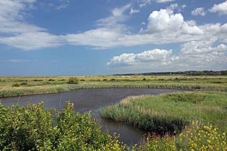 salt marsh: Coastal salt marsh