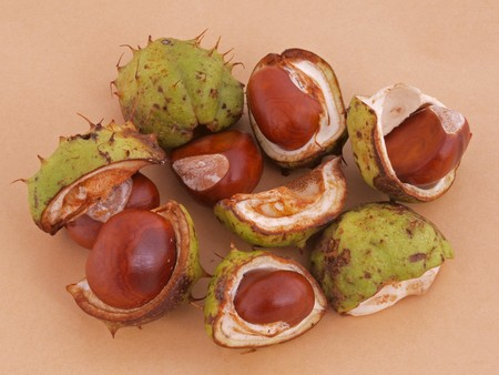 A conker is the seed of a horse chestnut tree.