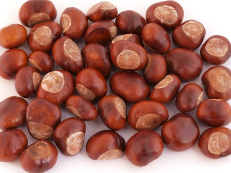 conker: A conker is the seed of a horse chestnut tree.