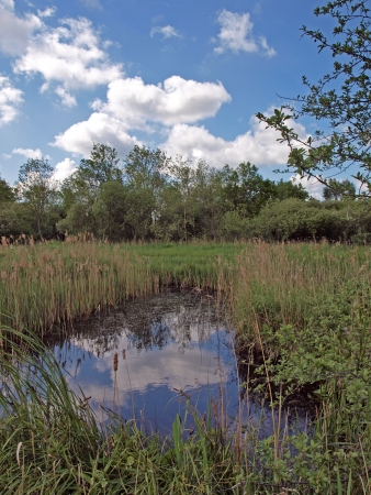 hides: View from the Roger Clark hide, it is one of many bird hides in Wicken fen