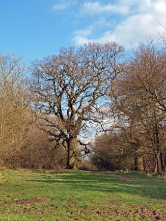 intrest: Oak tree in Brampton wood. Brampton wood is 327 acres and the second largest wood in Cambridgeshire. The first records are in the Doomesday Book of 1086 AD. In 1954 it was declared a site of Special Scientific Intrest. It is free to get in and open 247.