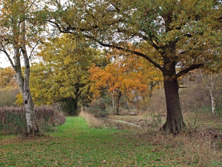 hectares: Autumn trees in Woodwalton fen nature reserve. Part of �The Great Fen Project�, that aims to restore over 3000 hectares of fenland habitat between Huntingdon and Peterborough.