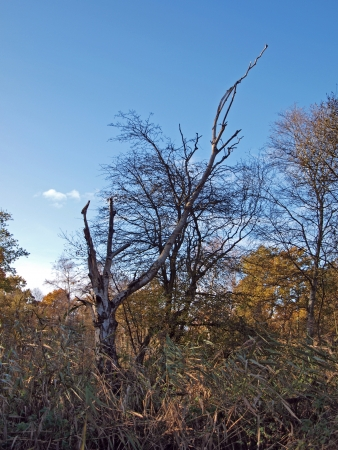 Autumn trees in Woodwalton fen nature reserve. Part of �The Great Fen Project�, that aims to restore over 3000 hectares of fenland habitat between Huntingdon and Peterborough.