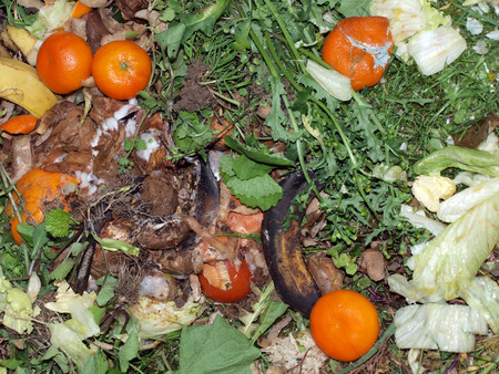 Kitchen and garden waste on a compost heap left to decompose. photo