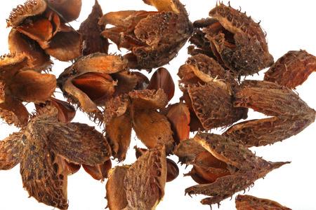 husks: Beechnuts and husks on a plain white background. Stock Photo