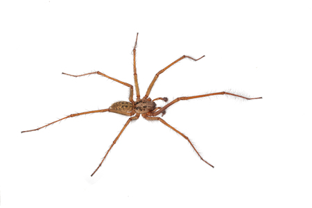 Close-up, macro photo of a spider on a white background.