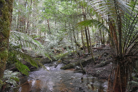 Cumberland Creek, Victoria Australia. Taken from Cumberland creek bridge, facing downstream. Temperate rainforest containing gums and tree ferns. Stock Photo - 92747736