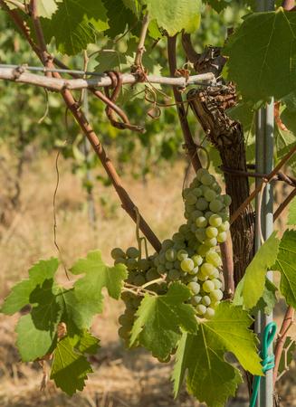 Tufo (Avellino), Italy, symbols, places and vineyards