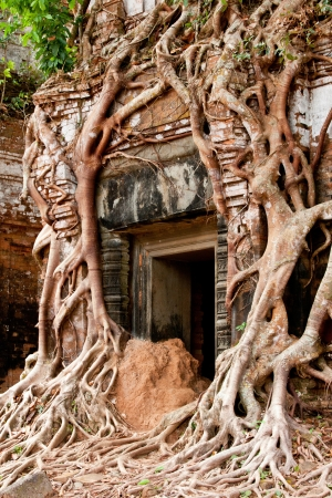 Banyon roots grow up a temple near the Angkor Wat complex in Cambodia