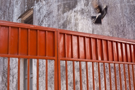 A pidgeon flys across a red fence from a concrete courtyard Stock Photo