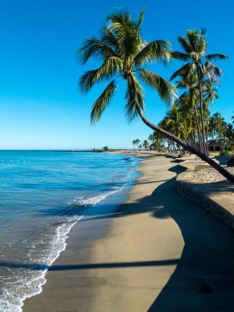 mauritius: Palm boom kijkt uit op een strand in Fiji