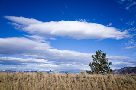 Layers of fluffy white cloud in a bright blue sky over grassland with a lone green tree on the horizon in a scenic landscape background
