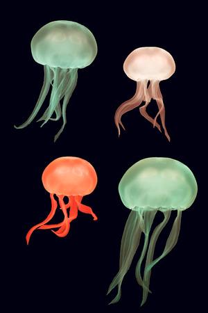 gonads: Coloured moon jellyfish (Aurelia aurita). Medusae against dark background coloured by aquarium lighting, in the family Ulmaridae