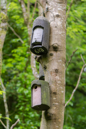 Bat box and bird box attached to tree. Artificial roosts provided for wildlife hanging from trunk of ash tree in British nature reserve Reklamní fotografie