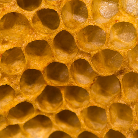 Detail of honey comb showing empty cells. Hexagonal structure within bee hive of European honey bee (Apis mellifera), in the family Apidae Stock Photo
