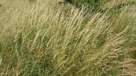 wild grass: hierba silvestre