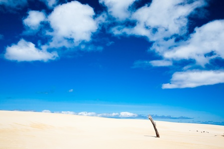 Henty Sand Dunes, West Coast Tasmania, Australia Stock Photo - 10119766