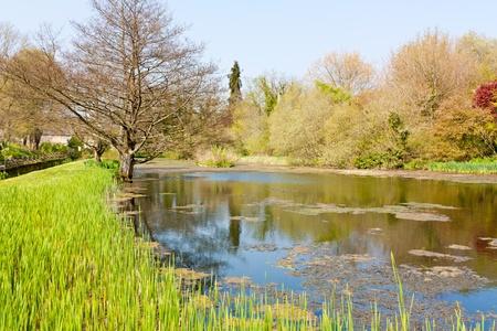 dorset: Small colourful lake  in Dorset England