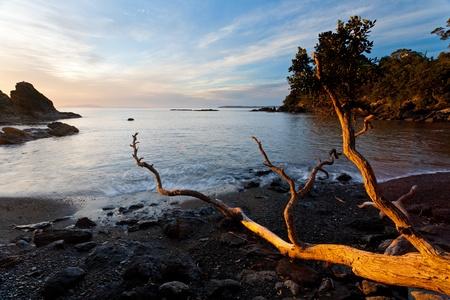 Luce dell'alba sulla spiaggia di Leigh Isola del Nord Nuova Zelanda