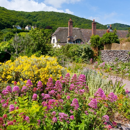 Wildflowers and cottages on the beach at Porlock Weir, Somerset England UK