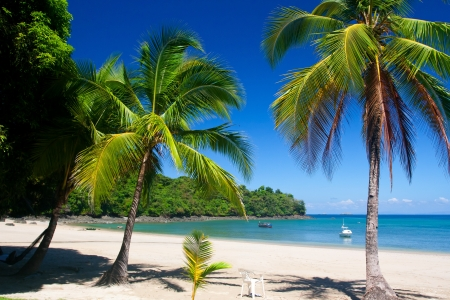 コイバ島のパナマ