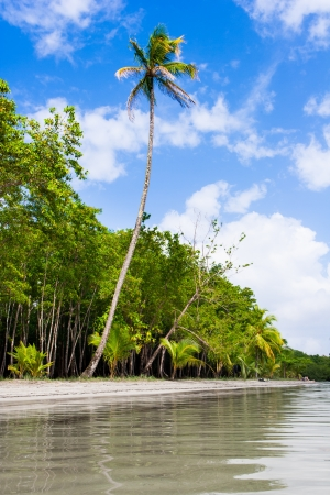 colon panama: Palm trees on Starfish beach Bocas Del Toro Panama Stock Photo