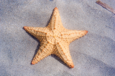colon panama: Starfish on Starfish beach Colon Island Bocas Del Toro Panama Stock Photo