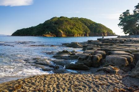 Goat Island Marine Reserve vicino Leigh Isola del Nord della Nuova Zelanda