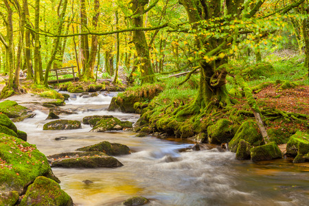 bodmin: River Fowey at Golitha Falls nature reserve on the edge of Bodmin Moor, Cornwall, England Stock Photo