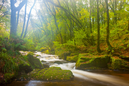 Beautiful misty woodland scene at Golitha Falls Nature Reserve on the River Fowey, Cornwall, England