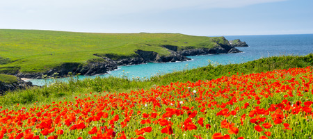 polly: Field of Poppies and wild flowers above Porth Joke beach near Newquay Cornwall England UK Europe Stock Photo
